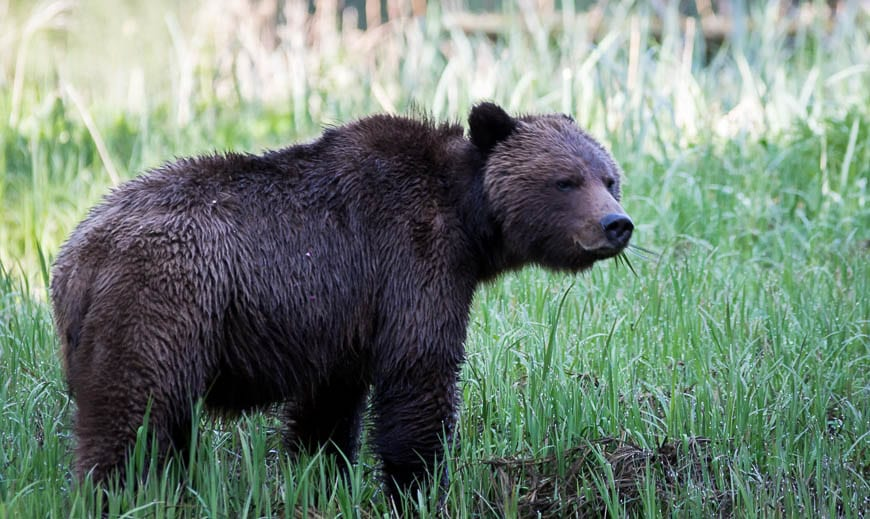 Tips for Staying Safe in Bear Country