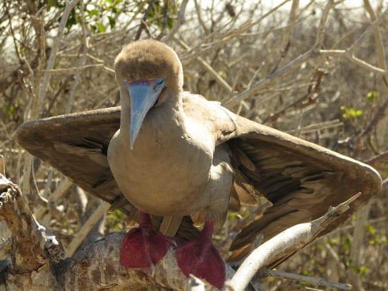 The Galapagos Islands – An Outdoor Nature Museum