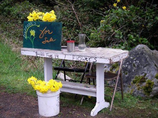 10 Great Things to Do in Washington's San Juan Islands