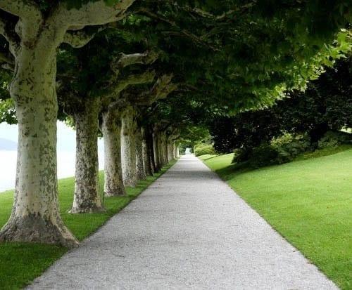 """A walk under plane trees"""