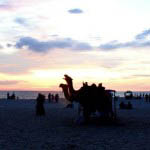 """Alappuzha Beach - locals and tourists gather on the beach at sunset for camel rides"""