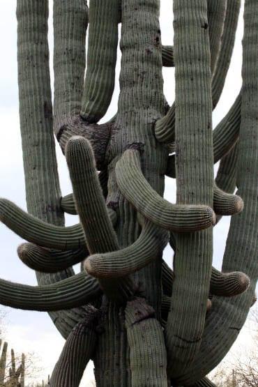 Travel Photos: Arizona's Saguaros – Sentinels of the Desert