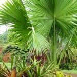 """""""Plants grow big on Kauai"""""""