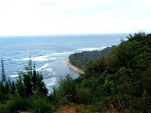 """""""Tropical views"""""""