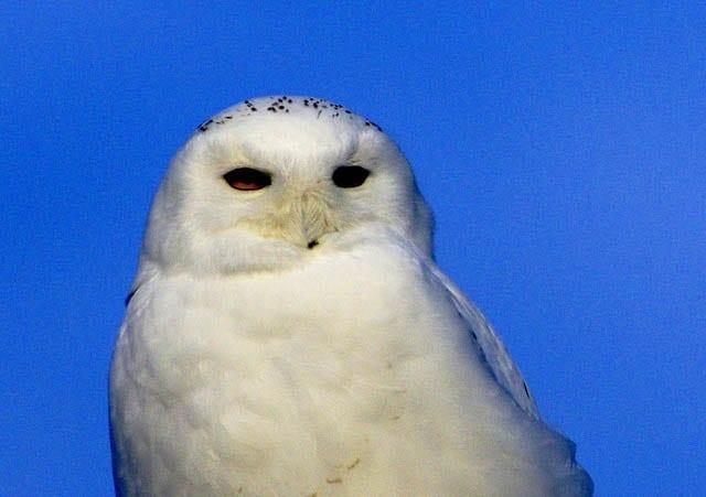 tennis scorebook superb owl odds