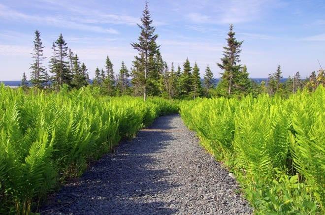 """""""A path through the ferns"""""""