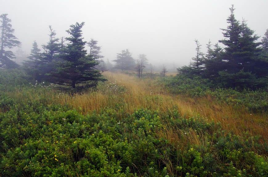 A Visit to Grand Manan Island, New Brunswick