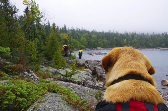 """dog watching his owners hiking"""