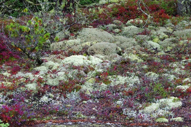 """""""Loads of interesting & colourful mosses and lichens"""""""