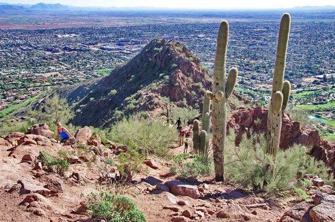 """A few saguaro cacti make an appearance"""
