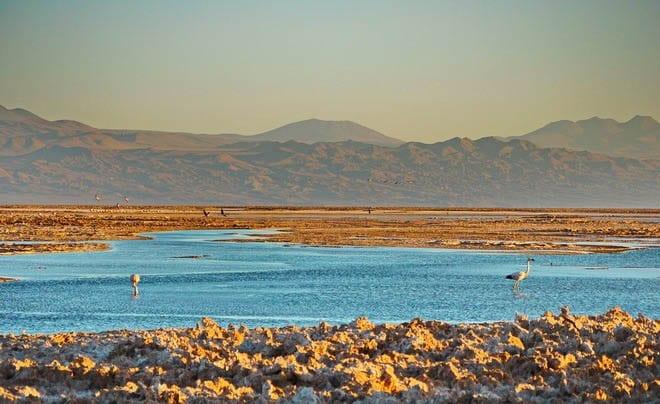 """Salt, water and flamingos - not quite what I expected in the Atacama Desert"""