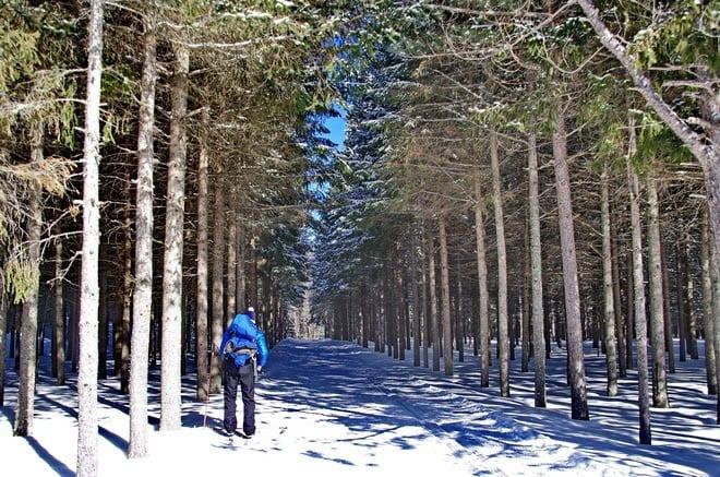 """Skiing through the trees  at Saint-Bernard"""