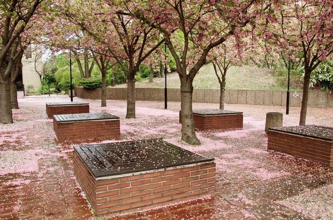 """Raining flower petals"""