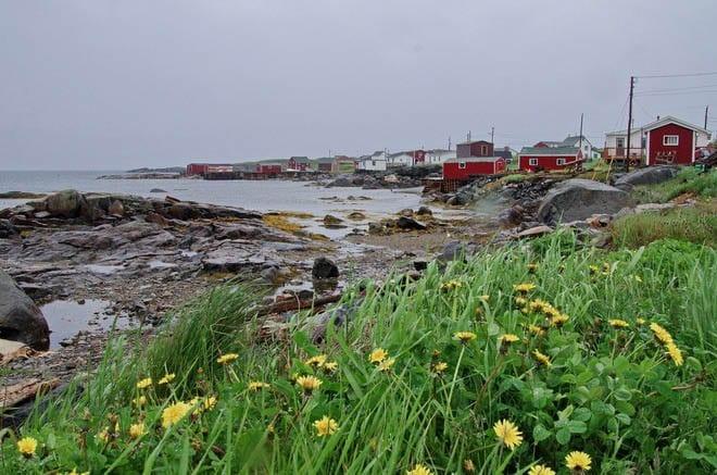 """Wildflowers line the coast"""