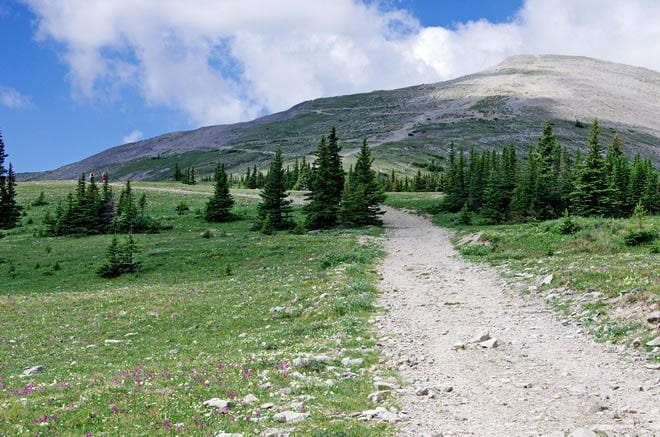 """""""The approach to Moose Mountain, Kananaskis Country"""""""