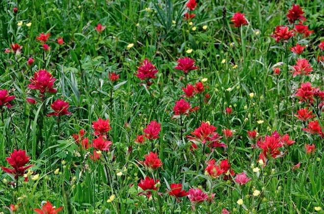 """wildflowers on the Moose Mountain hike"""