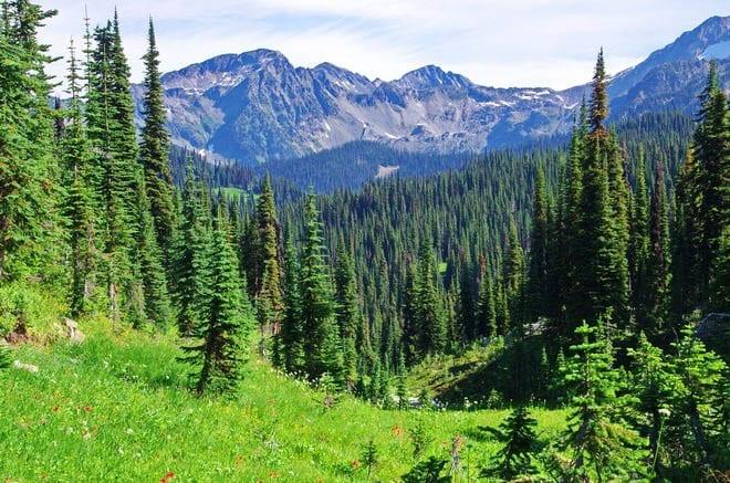 "The Eva Lake Hike - Mount Revelstoke National Park"""