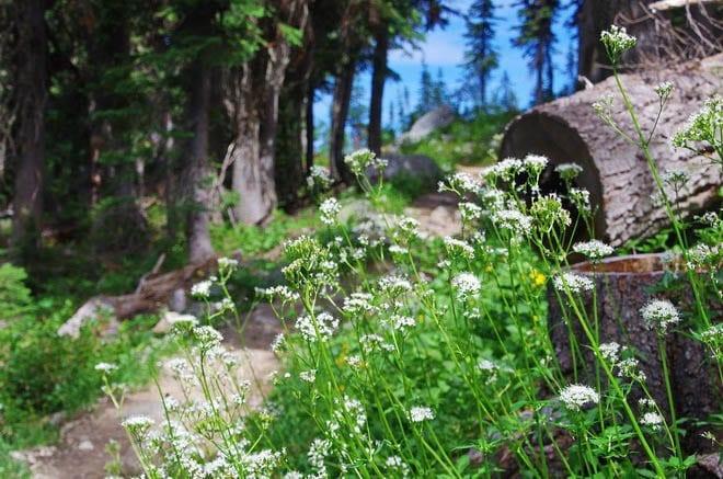 """Eva Lake hike"""