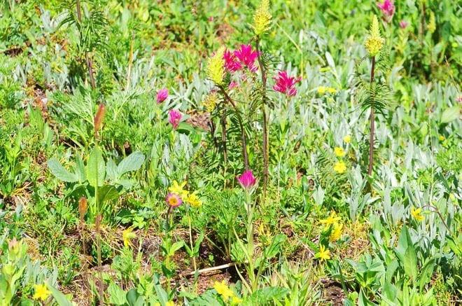 """wildflowers in Sunshine Meadows"""