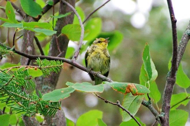 """Excellent birding on Hecla Island"""