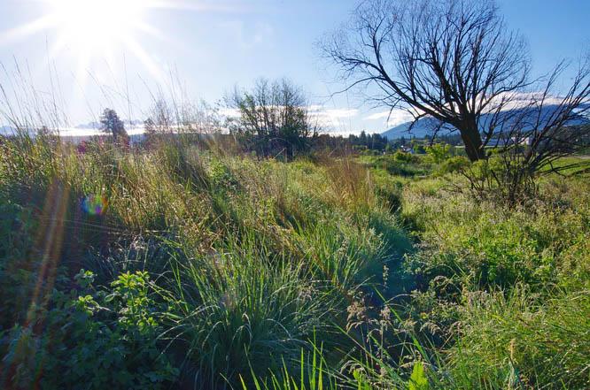 Elizabeth Lake Nature Area in Cranbrook