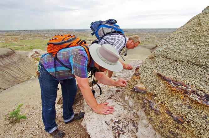 Looking for fossils - Dinosaur Provincial Park, Alberta