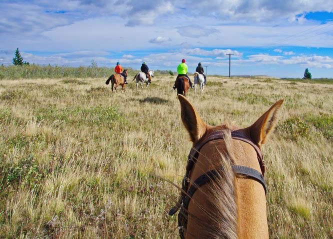 Horseback riding in Waterton Lakes National Park