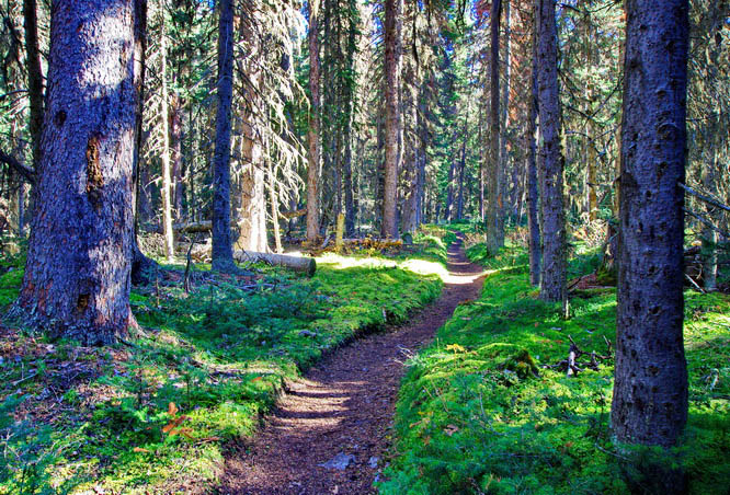 Hike to Buller Pass in Kananaskis Country