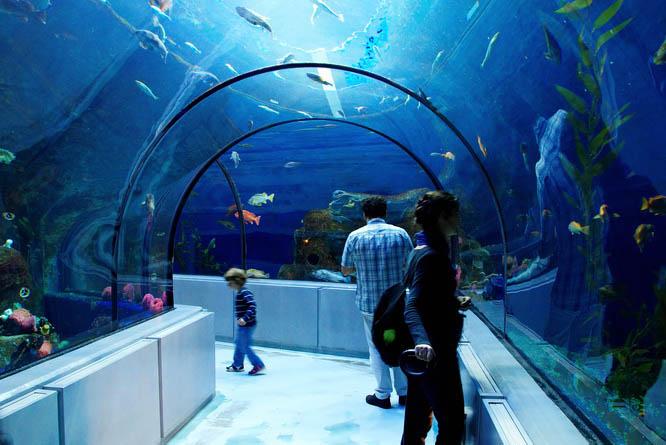 Walking through a tunnel of fish - Quebec City Aquarium