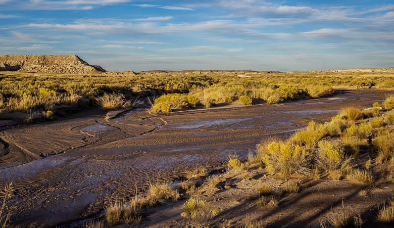 Discover the Beauty of Petrified Forest National Park in 17 Photos