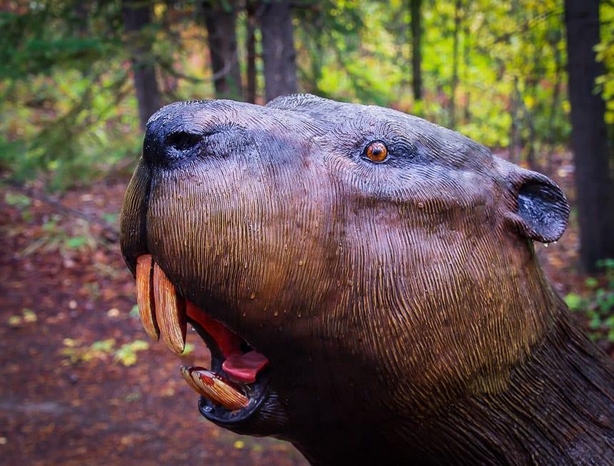 Giant beaver at the Yukon Beringia Interpretive Centre in Whitehorse
