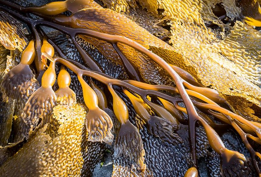Beautiful textures on the kelp