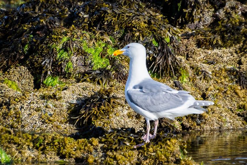 Look for lots of bird life in the Broken Group