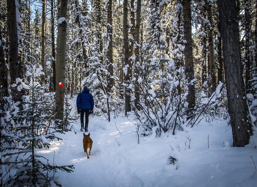 Dog Friendly Hikes Near Calgary