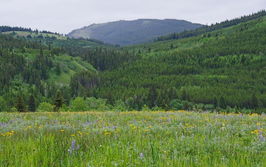 A Visit to Southern Alberta's Castle Provincial Park